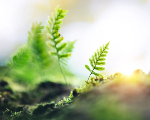 """Lessons from Shubhendu Sharma's TED Talk """"How to Grow a Forest in Your Backyard"""""""