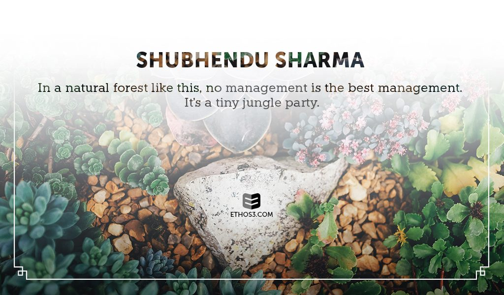 "Lessons from Shubhendu Sharma's TED Talk ""How to Grow a Forest in Your Backyard"""